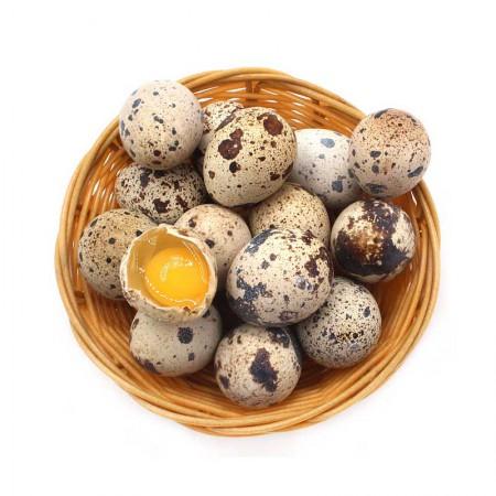 新鲜生鹌鹑蛋100枚农家散养