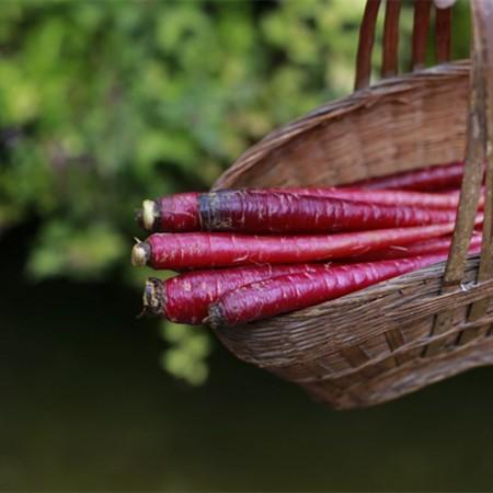 云南特产紫玉萝4斤
