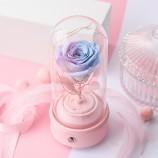 进口玫瑰蓝紫